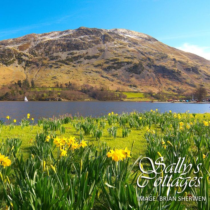 Today marks the Birthday of the great William Wordsworth! The romantic poet was born on this day in 1770. What better way to celebrate than admiring his favourite daffodils in Ullswater...
