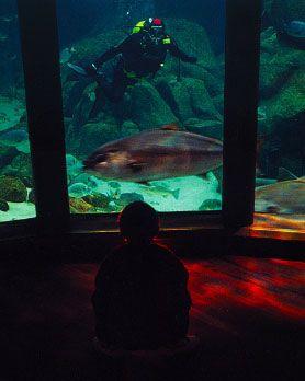 CASA DE LOS PECES Desciende al Nautilus, una sala sumergida en el mar, y revive sueño de Julio Verne en '20.000 leguas de viaje submarino'. Con miles de peces de 50 especies diferentes nadando a tu alrededor. Tiburones toro, águilas marinas, meros o rodaballos viven en este tanque de más de cuatro millones de litros de agua.
