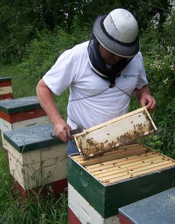 backyard beekeeping on pinterest beekeeping bees and bee keeping