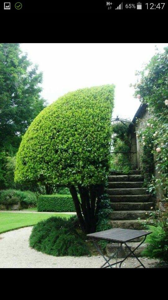 Garden., bahçe