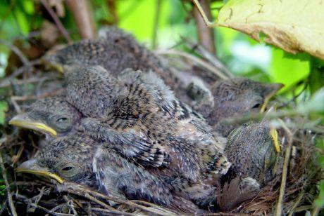 ptici-u-gnijezdu