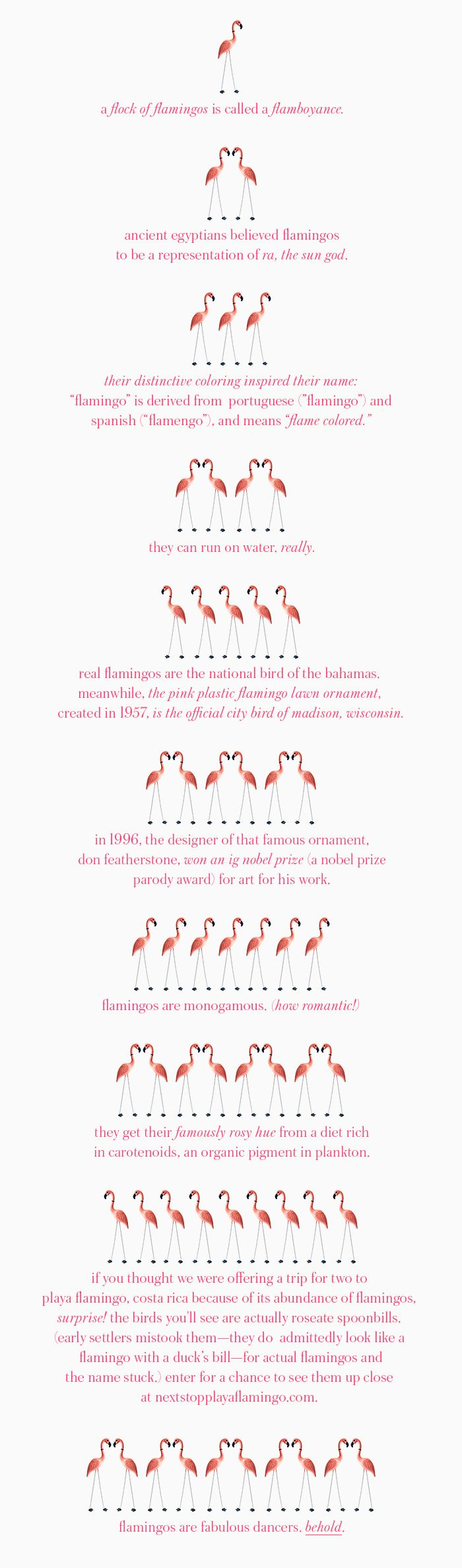 10 things you don't know about flamingos                                                                                                                                                      More