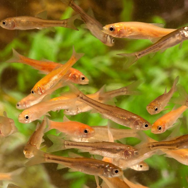 48 best live fish articles from pet care corner images on for Cool freshwater fish