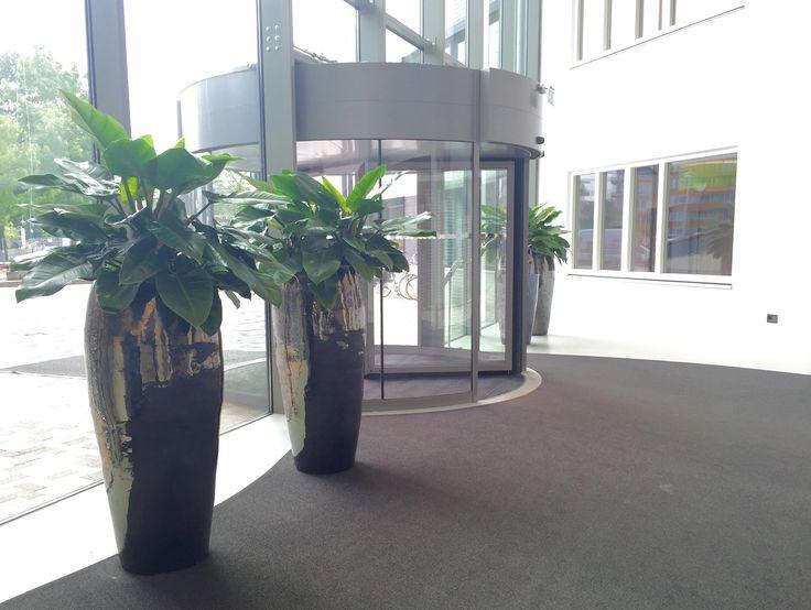 Vazen Metal Glaze met Philodendron planten.