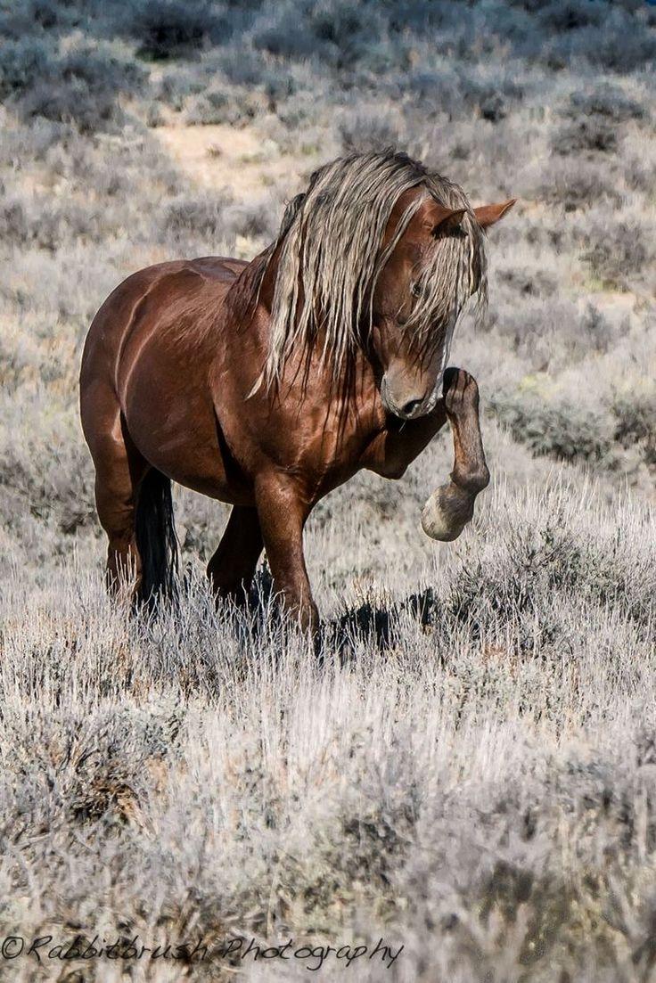 Sand Wash Basin wild horse.