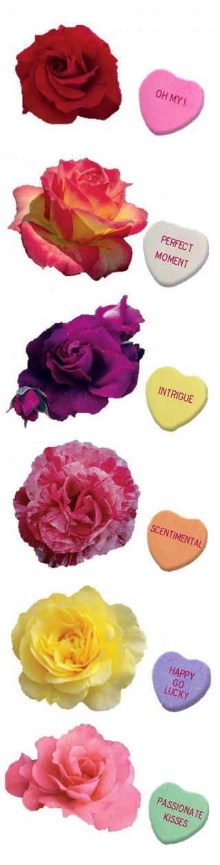 Say it with Roses - Express yourself / Armstrong Garden Centers