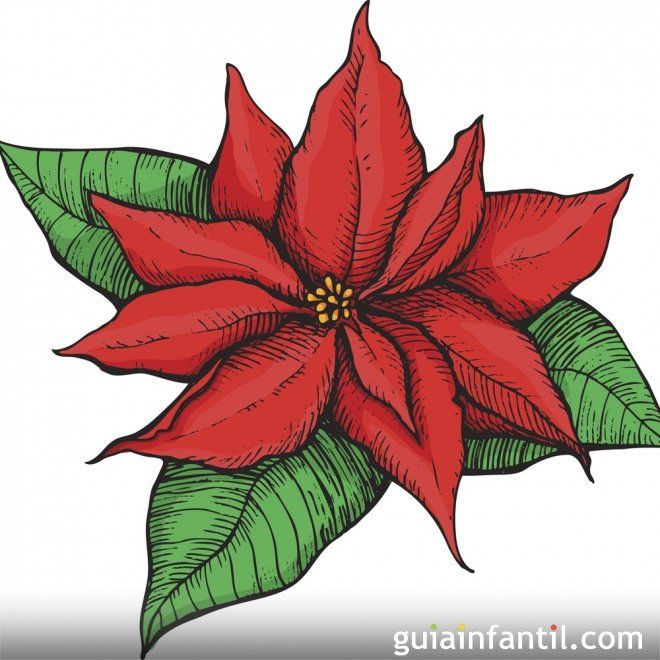 La Flor De Nochebuena Leyenda Navidena De Mexico Flor De Nochebuena Acuarela De Navidad Dibujos De Nochebuenas