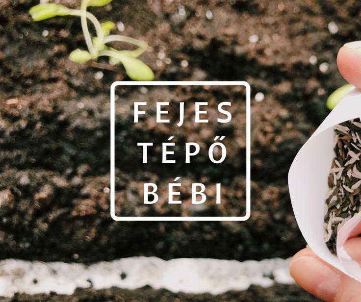 A saláta minden formája egy zöldséges ládába ültetve! Útmutató lépésről lépésre képekkel a Konyhakertész blogon.