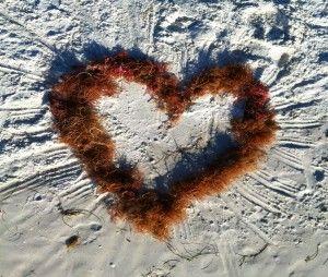 Algisyl: il gel di alghe contro l'insufficienza cardiaca