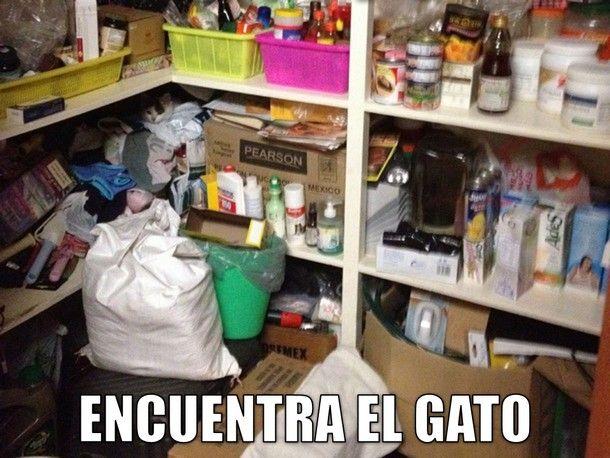 ¡Hoy es miáucoles! Todos los miáucoles publicamos un lolcat en español. Esta semana tenemos no solo un lolcat sino ¡cinco! Es un juego: Encuentra el gato