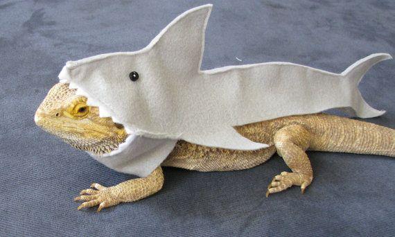 Shown on Discovery's Shark Week!!! Handmade Felt Bearded Dragon Great White Shark Costume with FREE Bow!