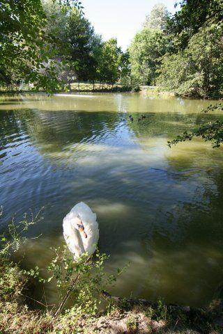 Parco dei cigni di Città di Castello | Park of the swans, Città di Castello | #AltaUmbria #Italy