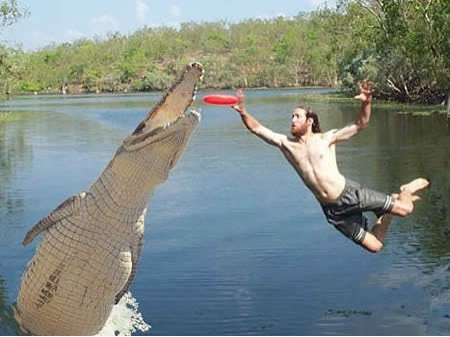 Taking a frisbee from the jaws of a gator.  What would he do for a Pocket Disc?