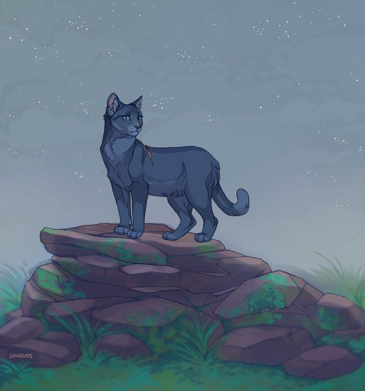 Warriors Dawn Of The Clans Characters: 1024 Best Images About Warrior Cats Animation On Pinterest