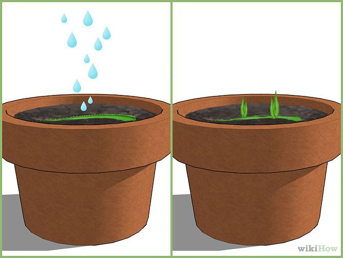How to Grow an Aloe Plant With Just an Aloe Leaf (with Pictures)