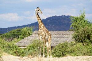 Capire quegli occhi tristi e felici, scuri e luminosi | Africa| Viaggiare alla ricerca di vibrazioni positive
