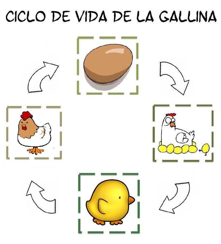 17 best images about proyecto los pollitos on pinterest for Actividades para jardin infantil