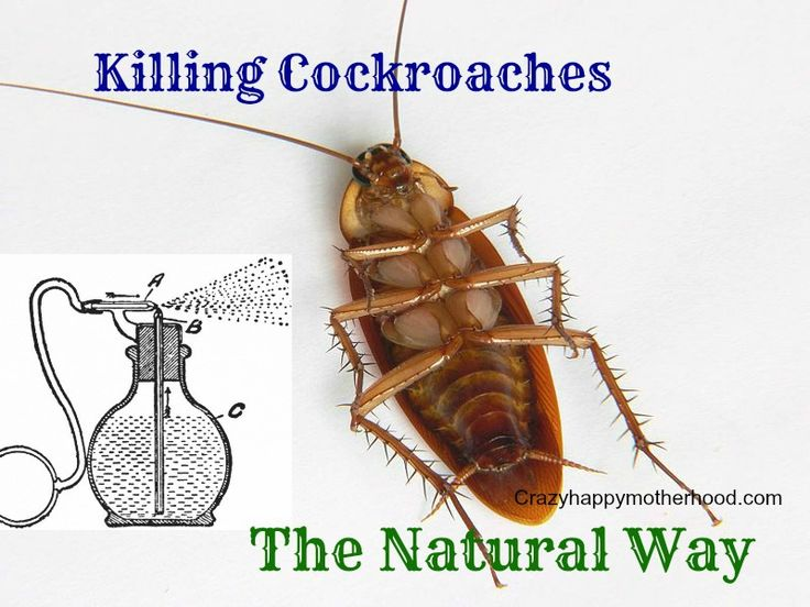 new balance 577 cockroach bites