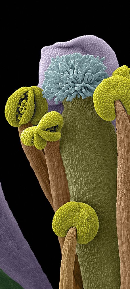 Details if the insides of a flower. See 18 Mind-Blowing Images From The World Of Science (SEM coloured image)