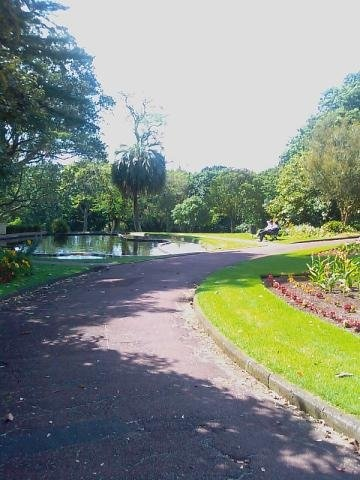 Inner city walk 1.5 hours - Auckland Domain
