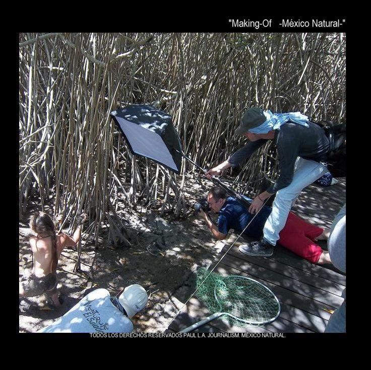 """' - Making Of - ' posters of the exhibit """"Mexico Natural"""" .                                                  """"Baby Crocodiles"""" .                                       This one in """"Estero El Salado"""". Puerto Vallarta.  Model: Patty Aguirre.  Photographers: Mario Olvera & Oscar Anguis."""