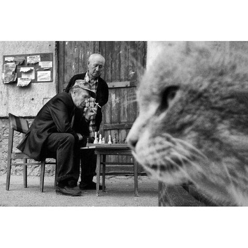 """Animals are an integral part of our life #Kazakh photographer Evgeniya Gor(@gykavka) says """"As far as possible we should help those who are not able to take care of themselves. In #Astana life can be harsh for a stray cat. In addition to photographing the citys catsGorhelps feed and rescue the animals. She titles this picture Among the worlds. You can find more at @gykavka. // #Kazakhstan #streetphotography #streetphotographer #decisivemoment #blackandwhitephotography #blackandwhiteonly…"""
