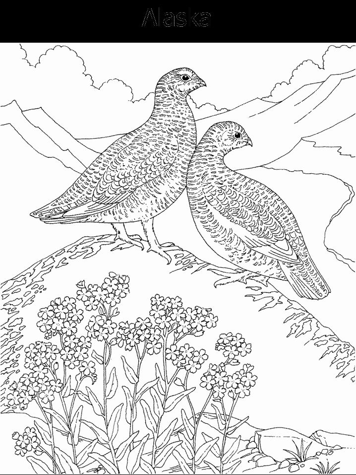 1000 images about Coloring Pages State Birds Flowers