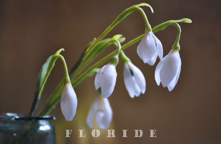 Snowdrops. Polymer clay
