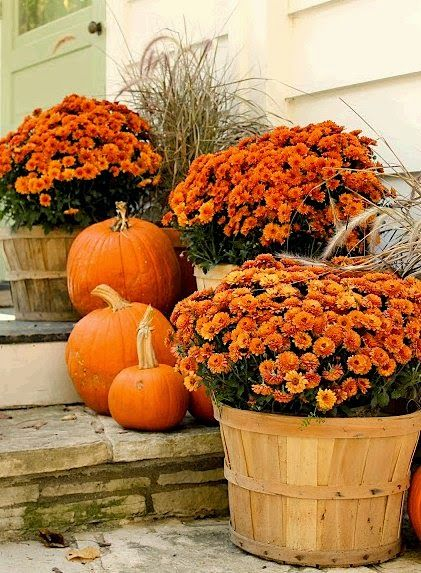 Apple baskets go beautifully with mums.