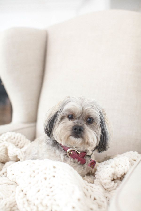 How cute is this little guy?http://www.stylemepretty.com/living/2015/10/05/cape-cod-beach-house-tour/ | Photography: Style Me Pretty Living - http://www.stylemepretty.com/