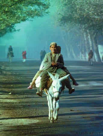 Donkey Taxi, Herat