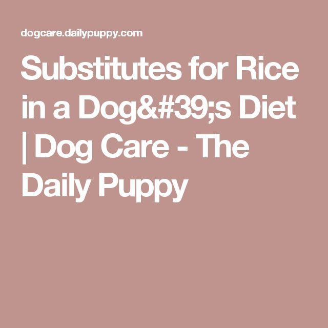 Substitutes for Rice in a Dog's Diet | Dog Care - The Daily Puppy
