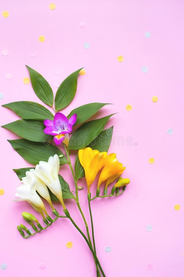 Blue Ribbon In The Form Of Number Eight On Pink Background With A Copy Space Affiliate Form Number Blue In 2020 Pink Background Mother Images Freesia Flowers