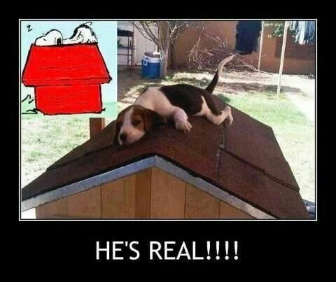 For my sweet doxie/beagle mix Ellie-  #doubledoseofhound!