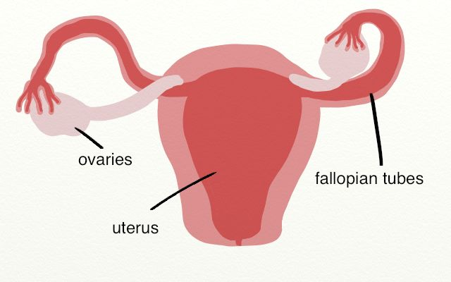 Paleo for Women | What Causes and Influences PCOS?