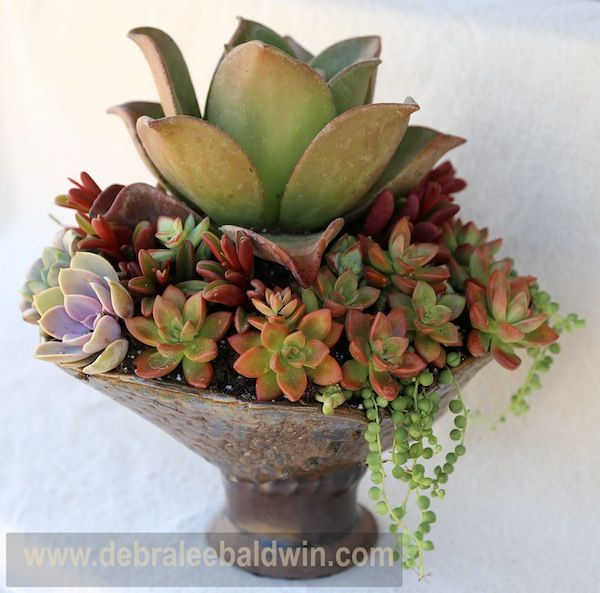 Succulent composition in a one-of-a-kind pot