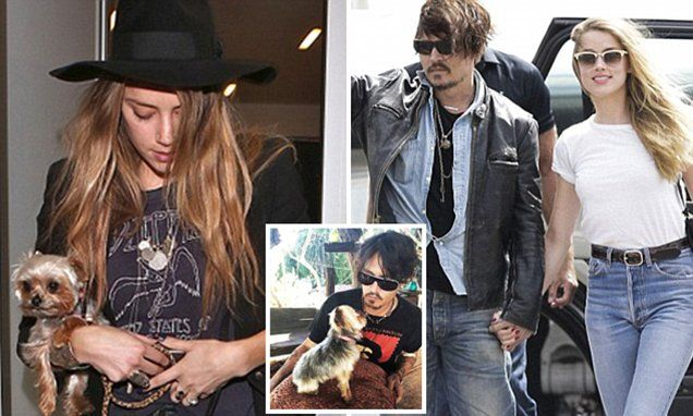 Johnny Depp's wife Amber Heard will wait until November to learn whether she faces jail over illegally flying two dogs into Australia on a private jet   Read more: http://www.dailymail.co.uk/news/article-3224639/Johnny-Depp-s-wife-Amber-Heard-facing-possible-jail-time-couple-flew-two-terriers-Australia-illegally-private-jet.html#ixzz3l68ImSx9 Follow us: @MailOnline on Twitter | DailyMail on Facebook