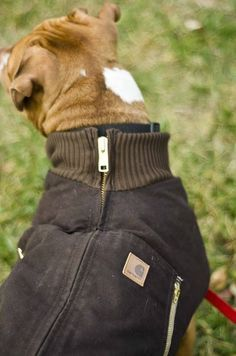 DIY for turning zip up jacket into a dog coat. Love this idea.