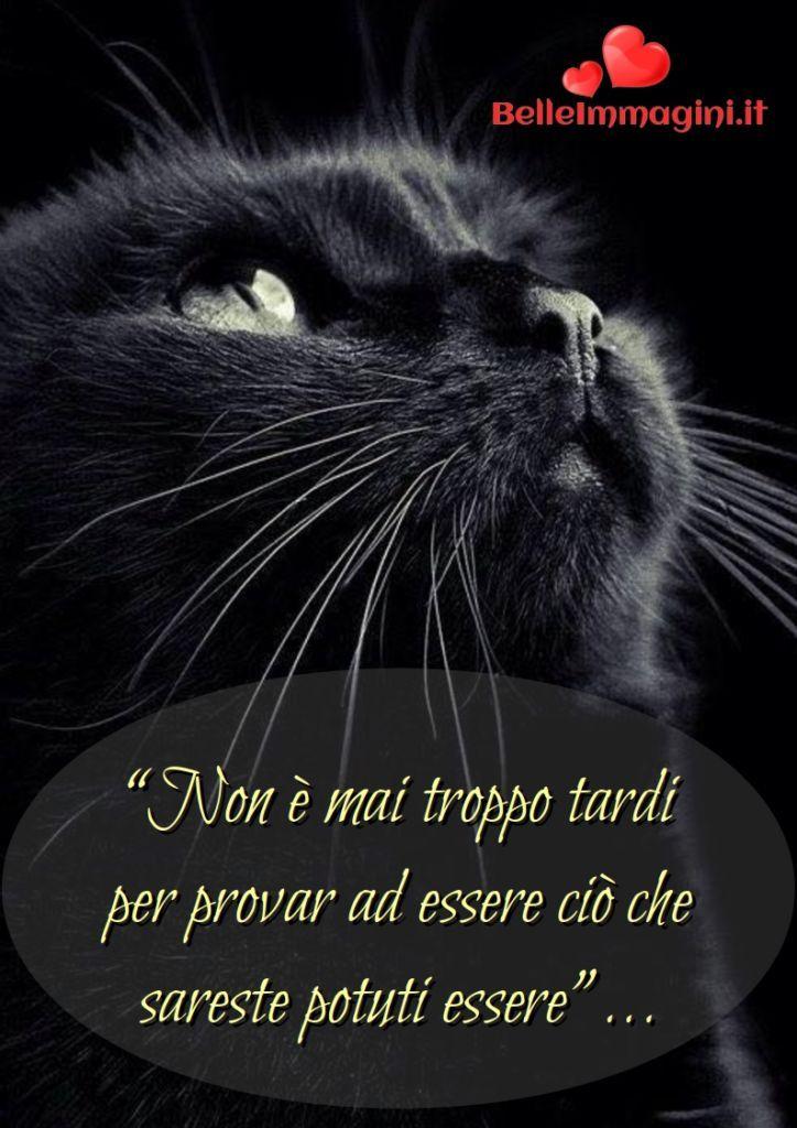 Belle Frasi Sulla Vita Da Mettere Su Whatsapp Immagini Parole