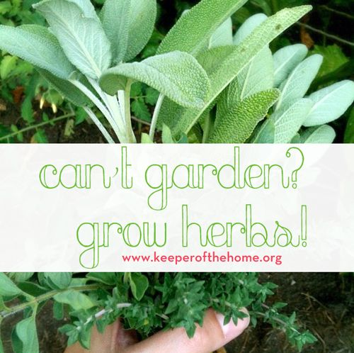 Got a black thumb instead of a green one? Here's a great guide to growing herbs when you can't garden! No matter your skills, space, or time limitations – growing herbs benefits you in the kitchen, your health, and more!