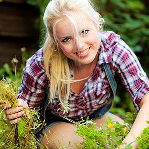 17 meilleures id es propos de tuer les mauvaises herbes sur pinterest jardin de fleurs tuer - Comment tuer les mauvaises herbes ...