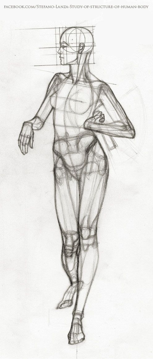 #anatomy #draw #drawing  https://www.facebook.com/Stefano-Lanza-Study-of-structure-of-human-body-1479159998770051/?ref=bookmarks