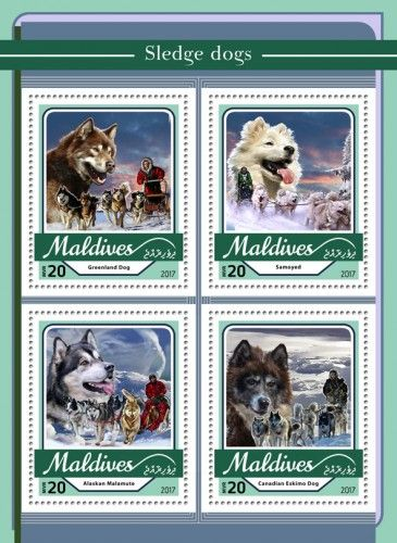 MLD17103a Sledge dogs (Greenland Dog; Samoyed; Alaskan Malamute; Canadian Eskimo Dog)
