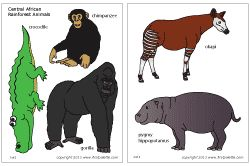Colored African rainforest animals