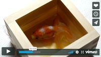 """MFS VIRAL VIDS-2   Hand-painted 3D Fish   """"Goldfish Salvation"""" Riusuke Fukahori  Amazing talent!...  When struggling with artistic vision, Fukahori's pet goldfish became his inspiration..."""