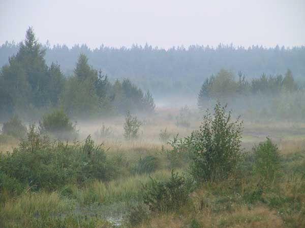 Утро туманное утро седое. Красивые пейзажи лета. Летняя природа. Времена года. Летние картинки