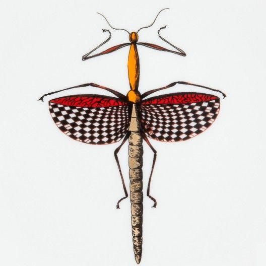 Daandi : Assiette porcelaine Haut de Gamme Histoire Naturelle de Animal Fabuleux, motif insecte 5, fabriquée à la main en France