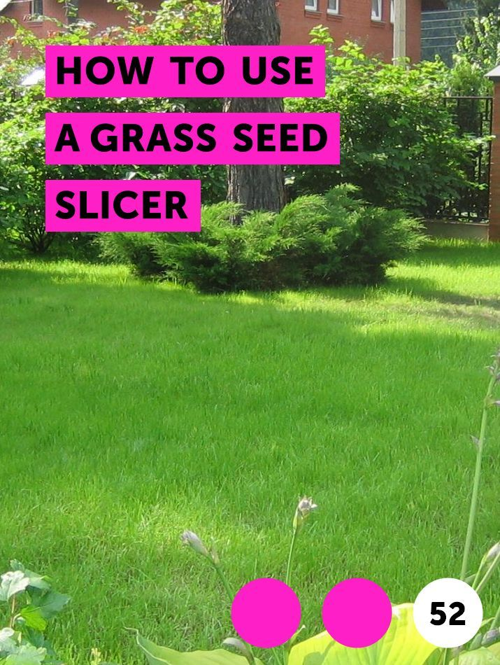 How To Use A Grass Seed Slicer Grass Seed Lawn Dragon Fruit Cactus