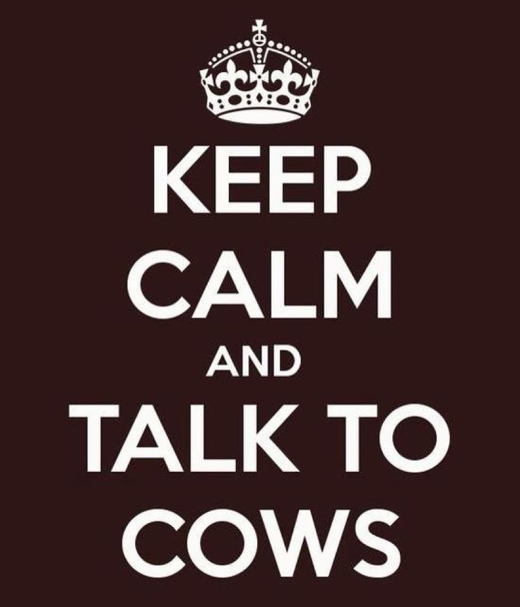 Keep Calm and Talk to Cows