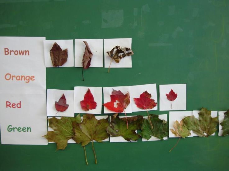 Counting & Graphing Leaves (from The Seeds Network via Teach Preschool)